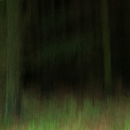 A Forest #1