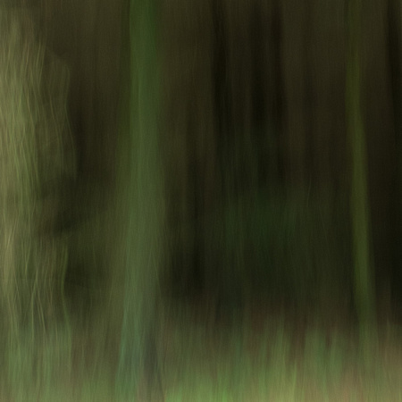 A Forest #3