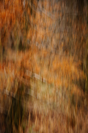 Beech Boughs #1